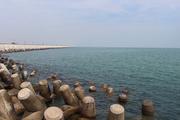 在东营,见证最黄的河和最蓝的海
