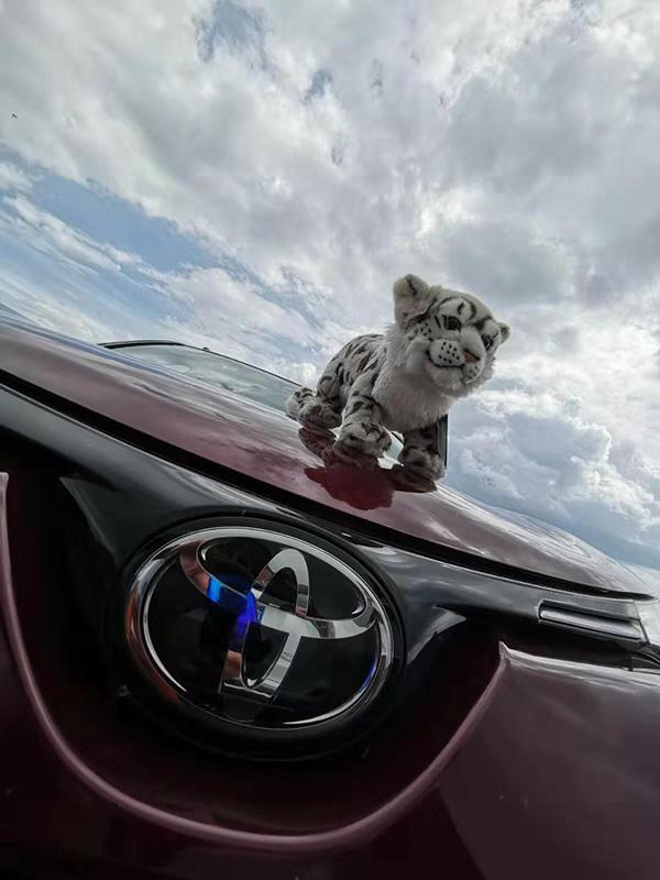 """一汽丰田SUV家族一路""""豹""""发"""